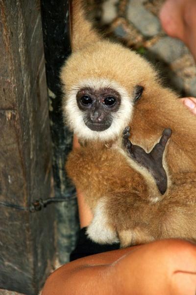 Tiny pet monkey by mikekay