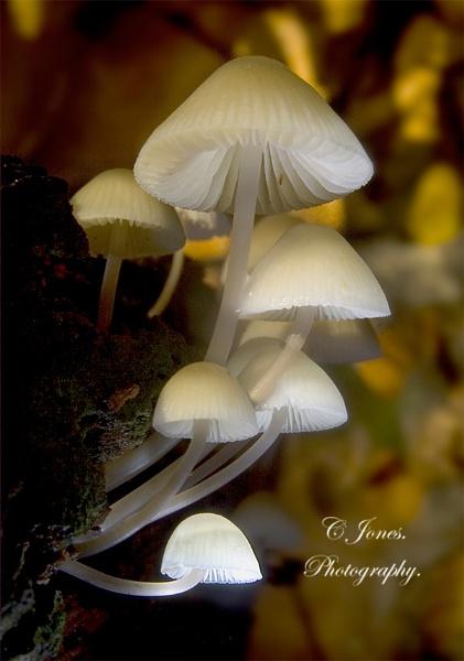 Angels bonnet. by cjones
