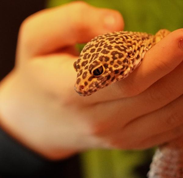 Dobbie King Lizard by kingofthebiffs