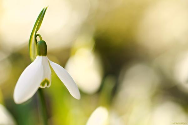 Spring Dance by HarmanNielsen