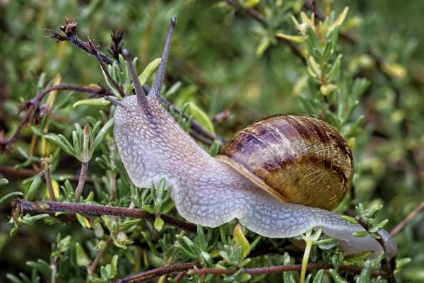 Snail Detail by DPW