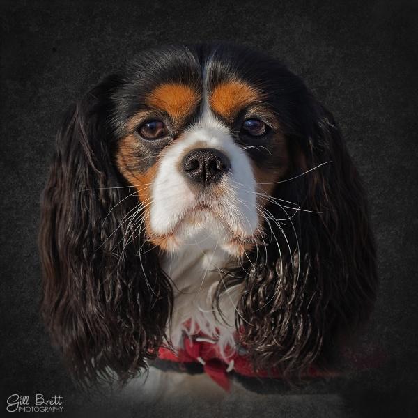Jasper by GillyB