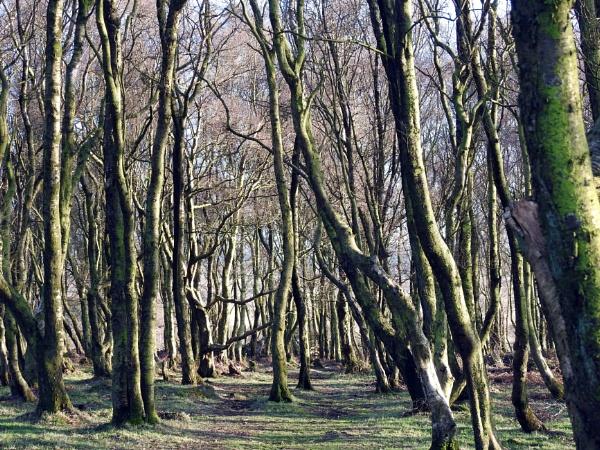 Woodland by Alan26