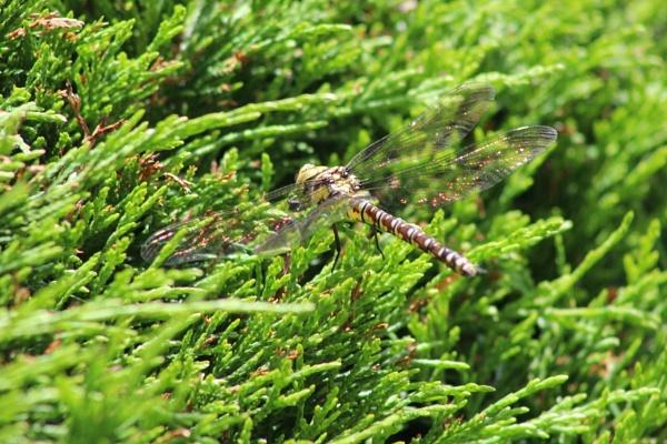 Dragonfly summer garden by topcatj
