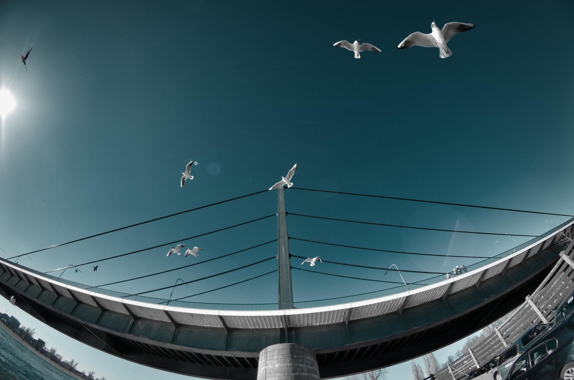 Theodor-Heuss-Bridge - Smile ;-)