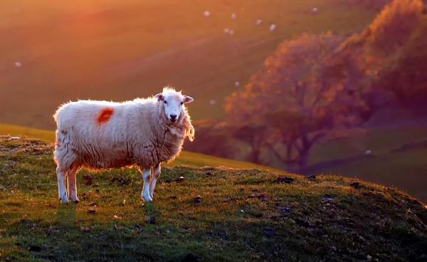 Are ewe backlit? by Ffynnoncadno