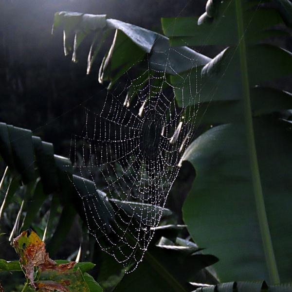 Tangled Webs by IamDora