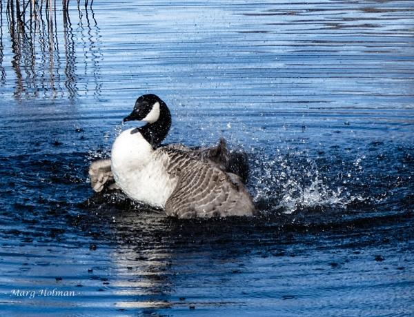 Splashing around by margymoo