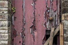 The netty door