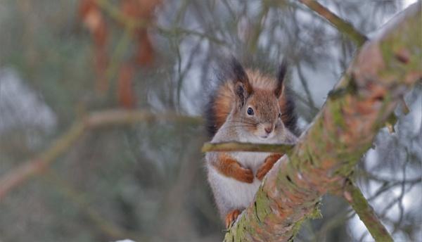 squirrel by MTT