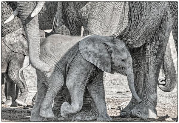 Elephant Calf by mjparmy