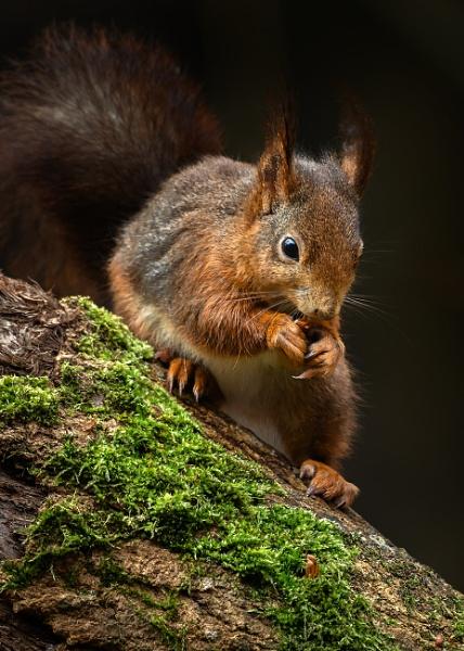 Feeding Red Squirrel by BydoR9