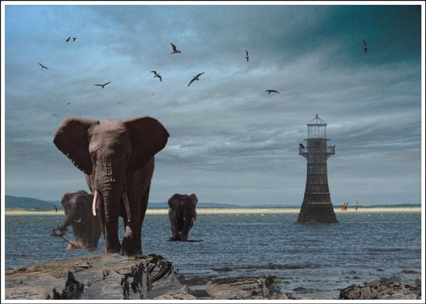 The Whitford Elephants by notsuigeneris