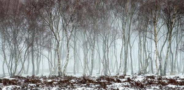 Dancing Trees by Trevhas