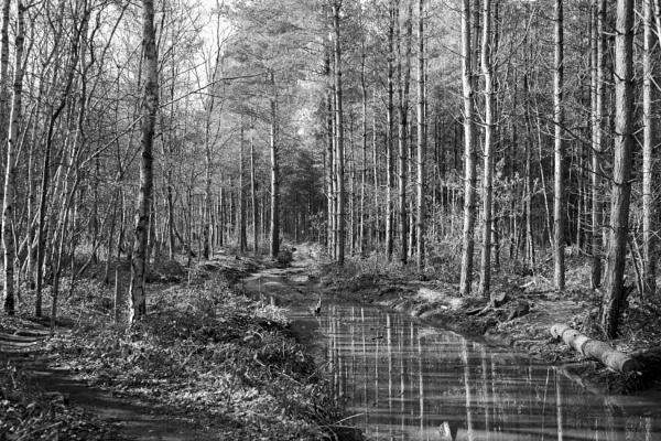 Thieves Wood by jadcx