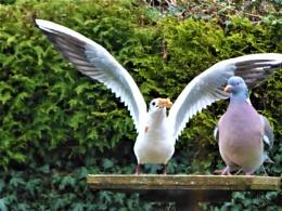 bird table wars