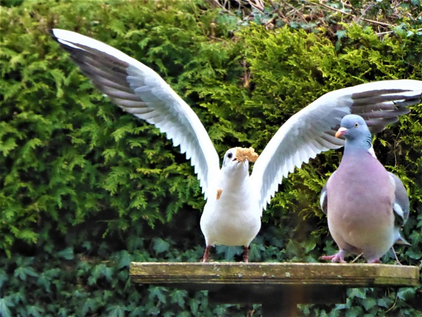 bird table wars by jenny007
