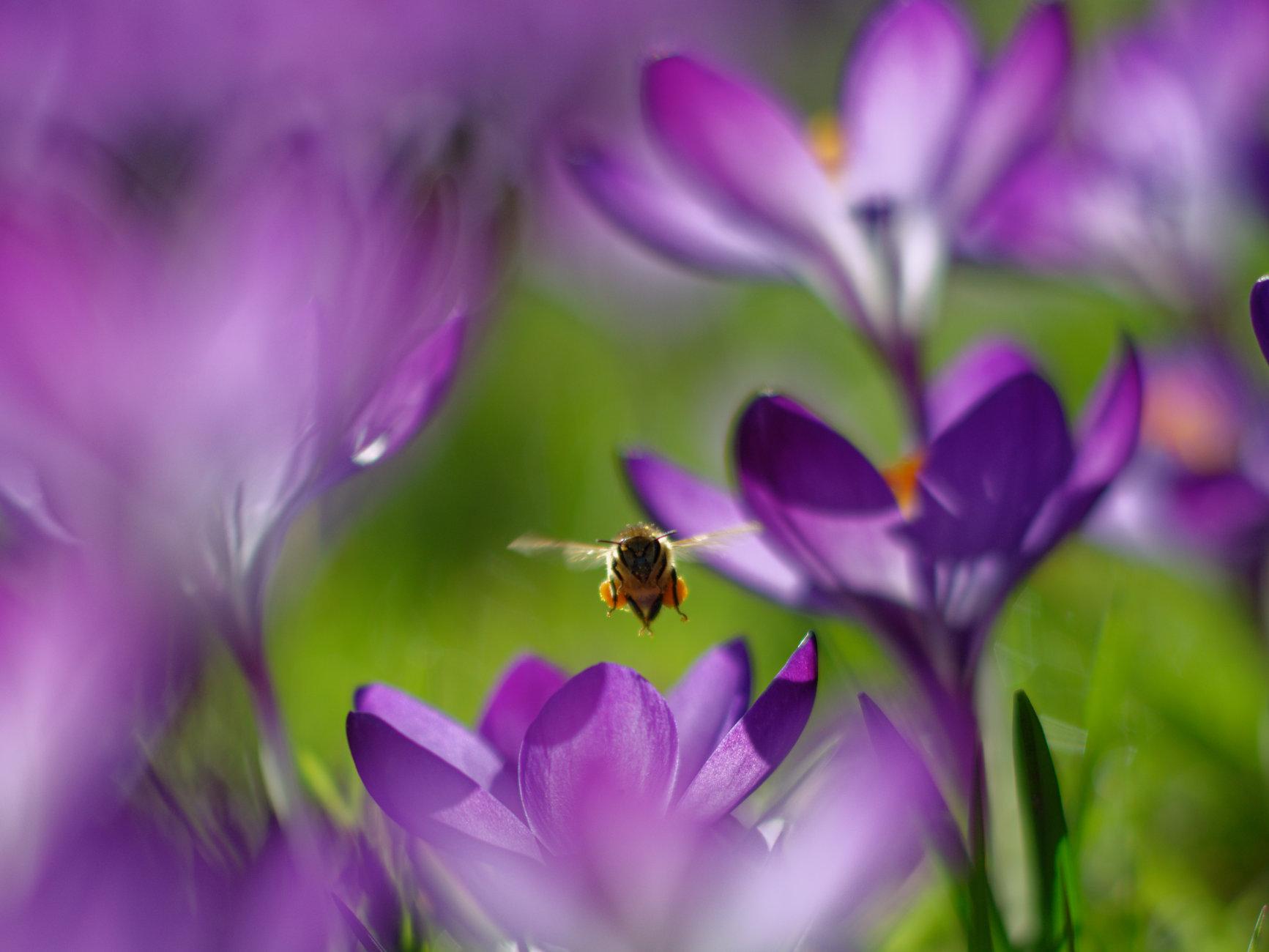 Saffron seeker