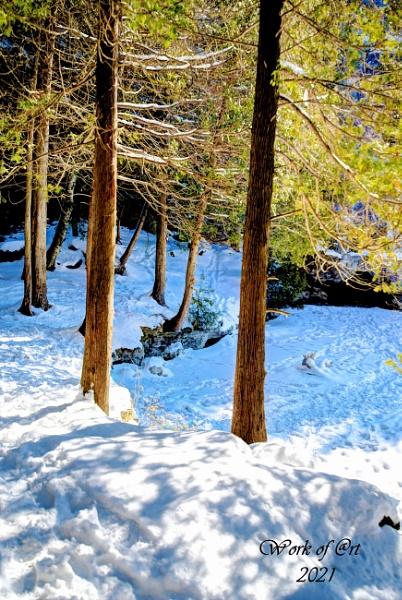 Snowy Trail by AlwaysAl