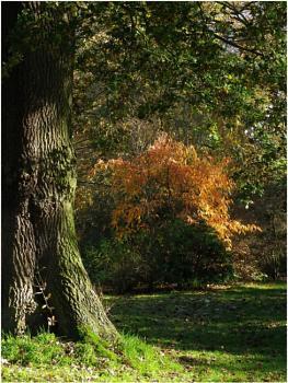 Arley Landscape