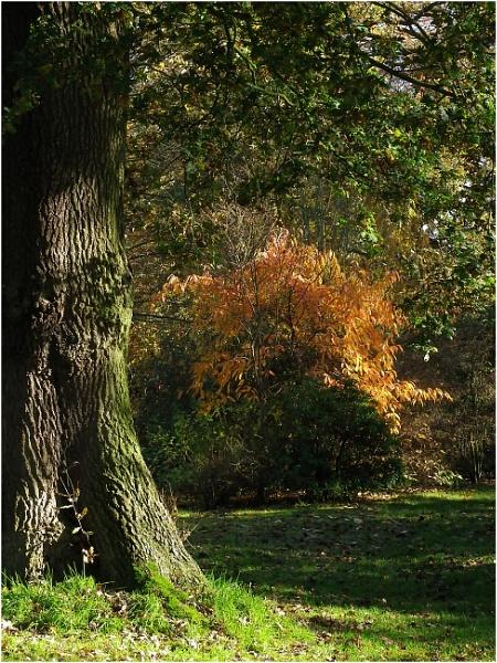Arley Landscape by johnriley1uk
