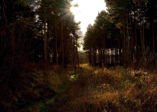 Shawbury Heath by Fogey