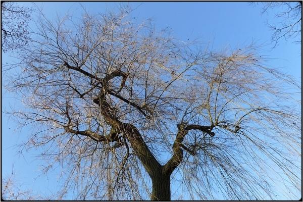 spring sprouts by FabioKeiner