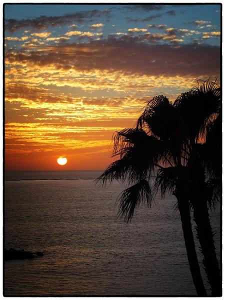 Sunset Palms by DaveRyder