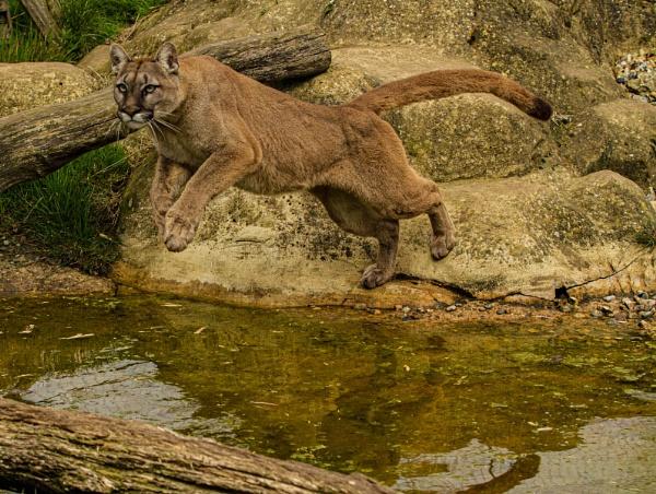 Puma by RonDM