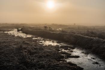 Misty peatlands dawn