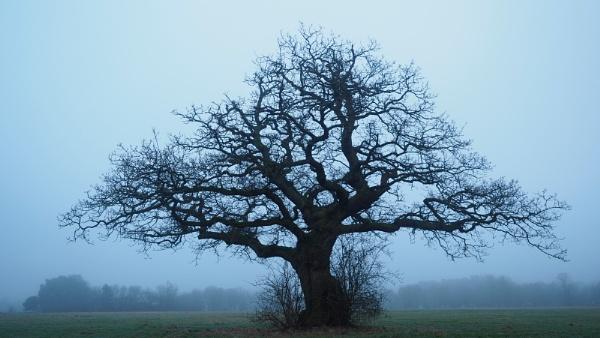 Triangular Tree by fredsphotos