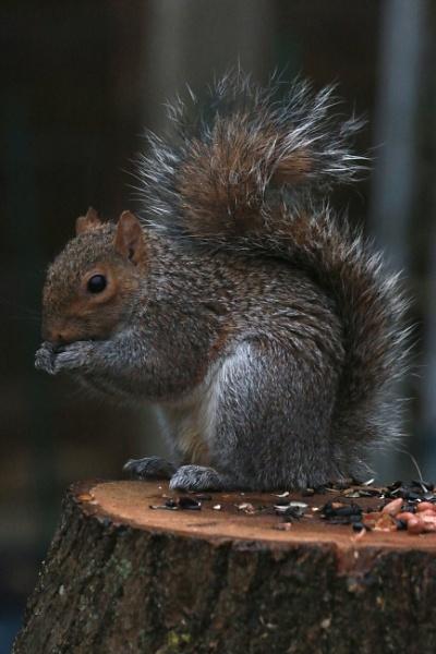 Sammy Squirrel by Stormygphotos