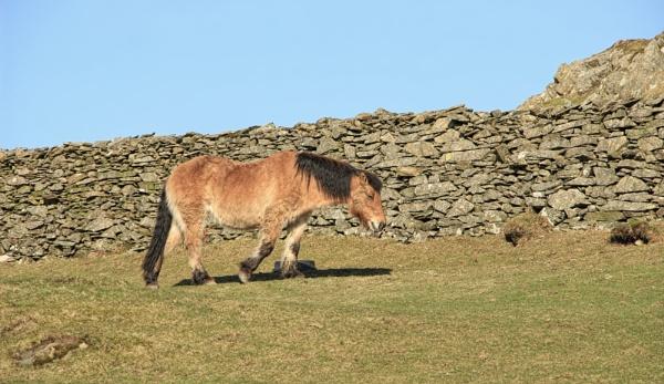 The Muddy Pony by canoncarol