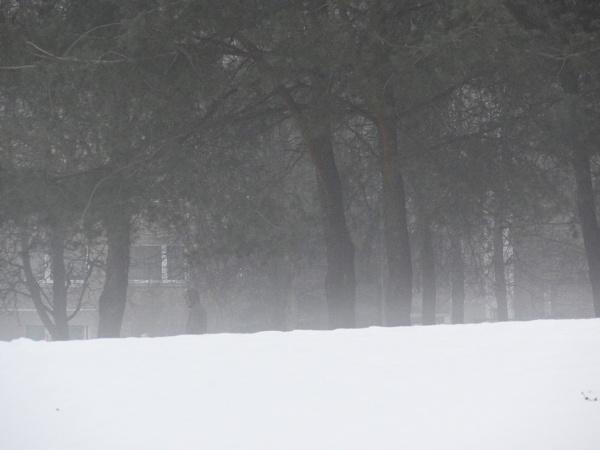 Gray season. Vapour over the snow by SauliusR