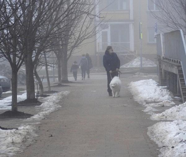 Gray season. The snow will melt, the white dog will not melt by SauliusR