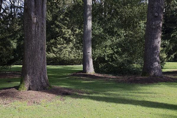 Three Trees  Standing - Westonbirt Arboretum Glos by VincentChristopher