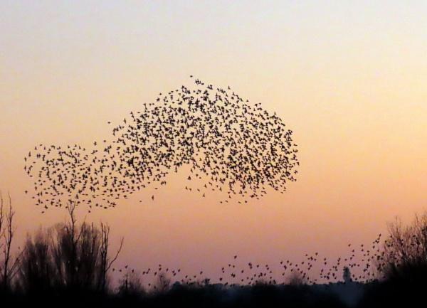 Starling wormuration by BlueJonnyp