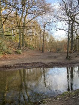 Tree Reflections Northumberland