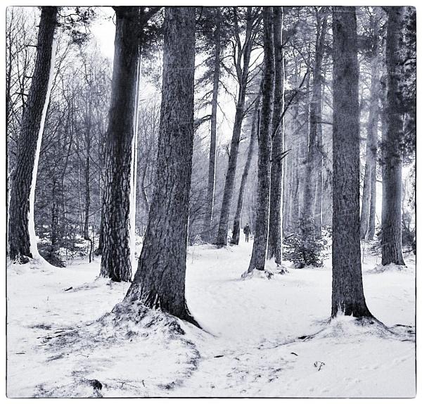 A Winter Walk by MalcolmM