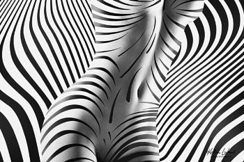 fine zebra nude art