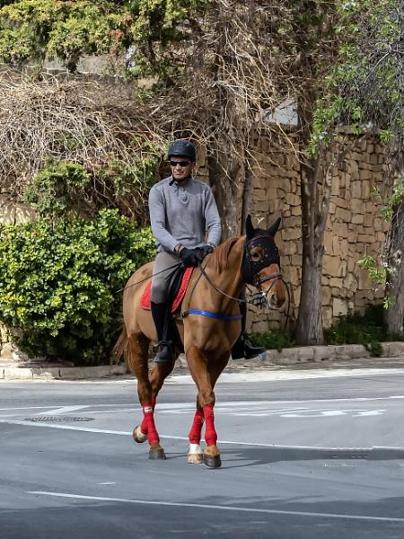 A Morning Horse Ride by Xandru