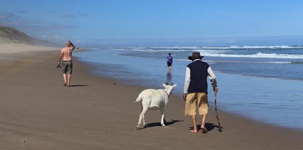 Old man walking his goat. by Nigel_NZ