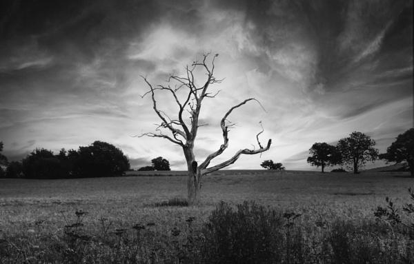 The dead oak by Ffynnoncadno