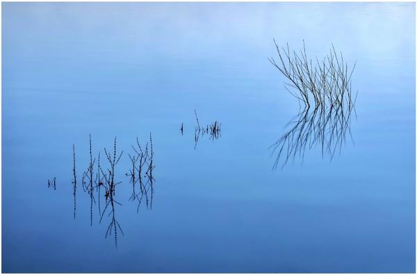 Still blue by Carlos9