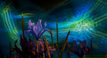 Light show with Iris