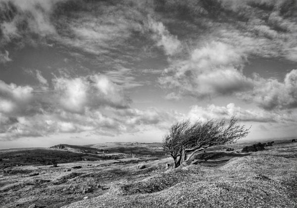 Windswept by Looseknee