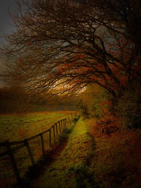 Woodland Light by minelab