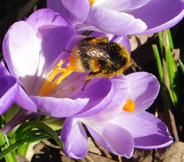 Drunk on Pollen by SUE118