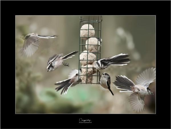 Feeding time by craggwildlifephotography