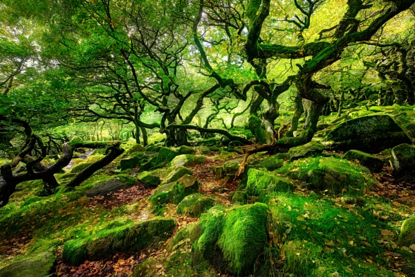In the woodland 2021 by DaveShandley